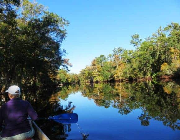 The Withlacoochee River plays second fiddle to the Rainbow River, but it is exquisite. (Photo: Bonnie Gross)