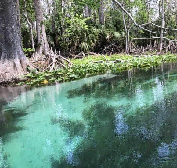 Clear turquoise water along Silver River. (Photo: Bonnie Gross)