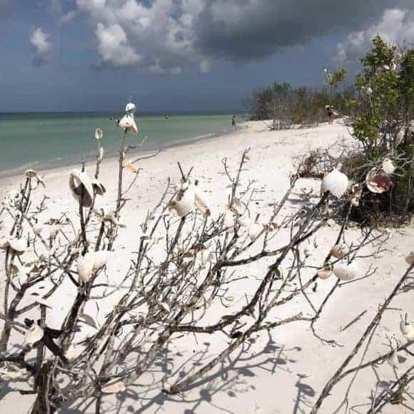 Seashell tree at Tigertail Beach on Marco Island. (Photo: Bonnie Gross)