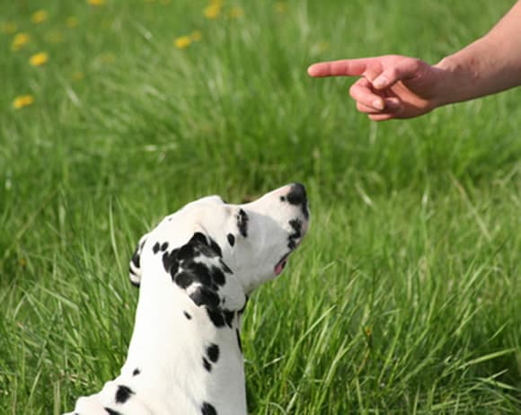 tips for training a dog
