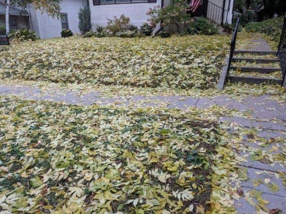 Frequently Asked Questions About Using a Lawnmower To Pick Up Leaves