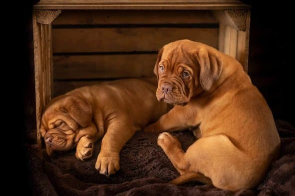 Puppies are more at risk of coccidia infection because of their immature immune systems.