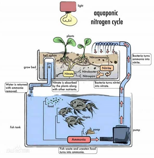 Diagram showing how aquaponics works.