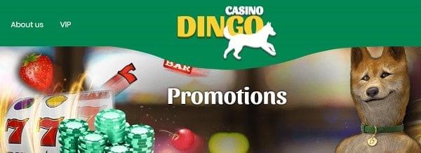 Dingo Promotions