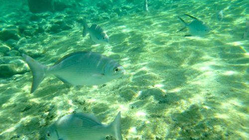 Fishes swimming near a cozumel beach