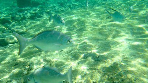 fishes swimming near a Cozumel beach