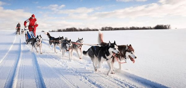 The best way to see lapland is on the back of a dog sled.