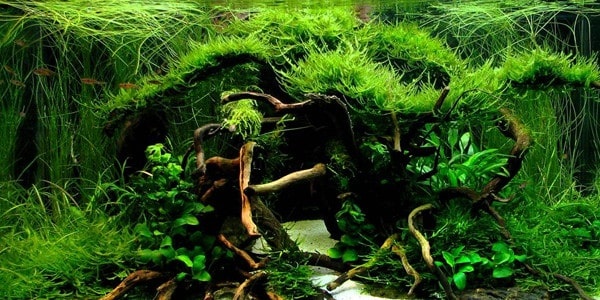 How To Create Aquascape with Jungle Style