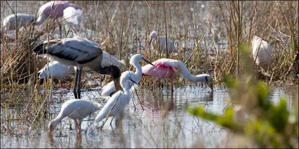 Birds at Shark Valley, Everglades National Park (Photo: National Park Service)