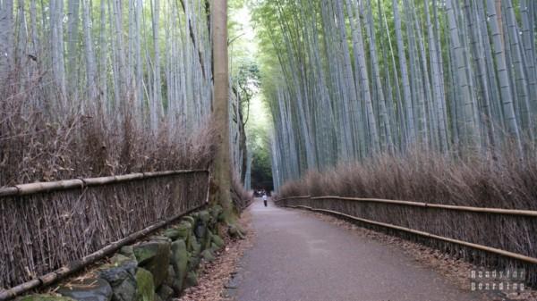 Ścieżka Bambusowa w Kioto
