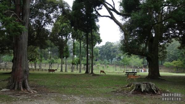 Jelonki w Nara Park
