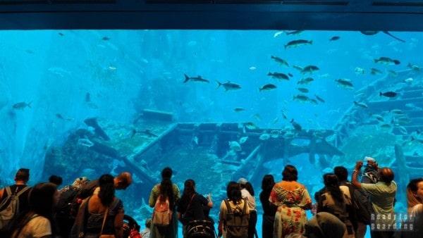 S.E.A. Aquarium - Sentosa, Singapur