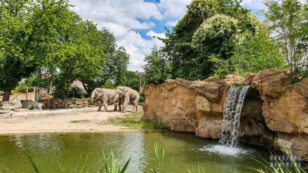 Ogród zoologiczny w Lipsku - Niemcy