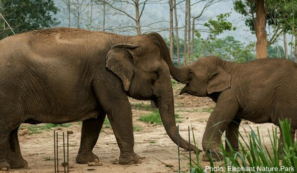 Elephants at the nature park in thailand; better than a zoo