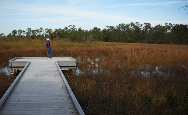 Grassy Waters Preserve Boardwalk in West Palm Beach. One reason this made our list of best boardwalks in Florida is that its low rails don't block the view from a wheelchair.