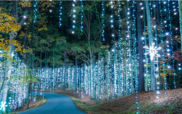 Callaway gardens outside of atlanta becomes a forest and fields of lights at christmastime.
