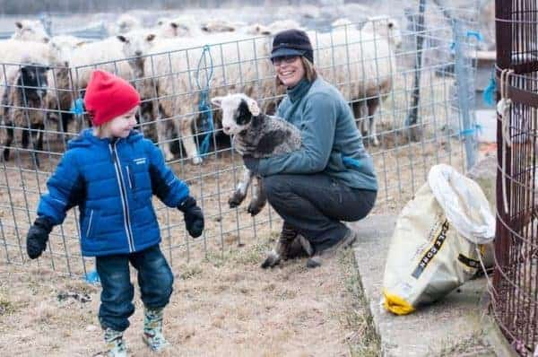 The owbre of bluebird trails b&b introduces a young guest to a fuzzy lamb.
