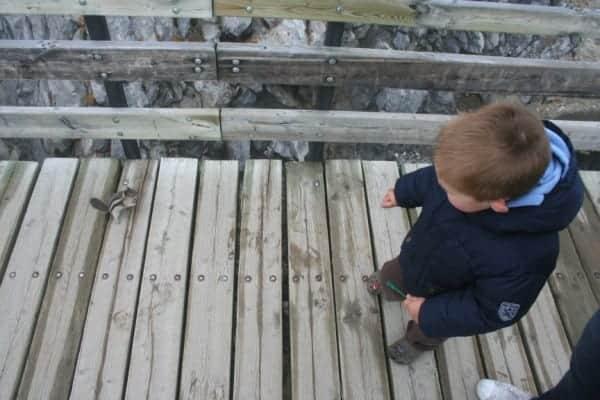 sulphur mountain chipmunk, chipmunk banff, banff with a toddler, banff with toddlers