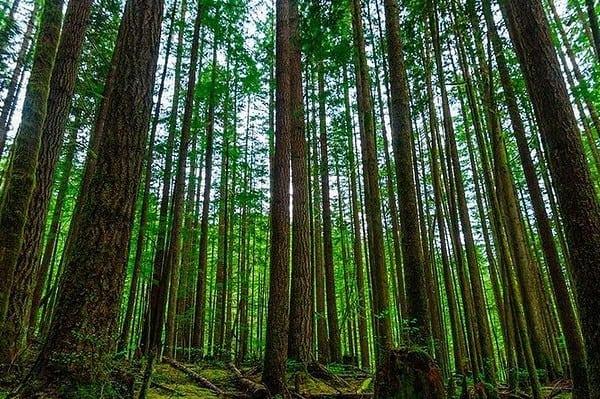جنگل-راش