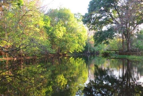 Late afternoon on Arbunkle Creek FL.