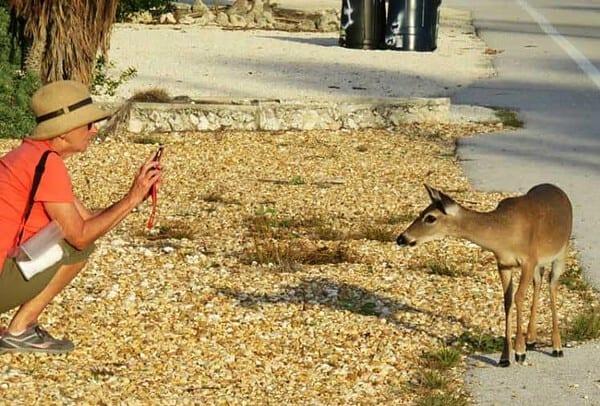 Key Deer in Big Pine Key within the National Key Deer Refuge. (Photo: David Blasco)