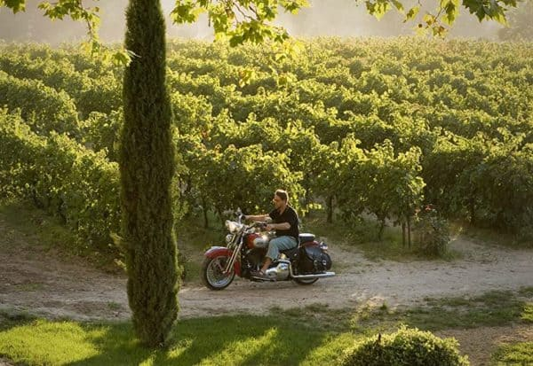A good year is all about vineyards and vines and southern france.