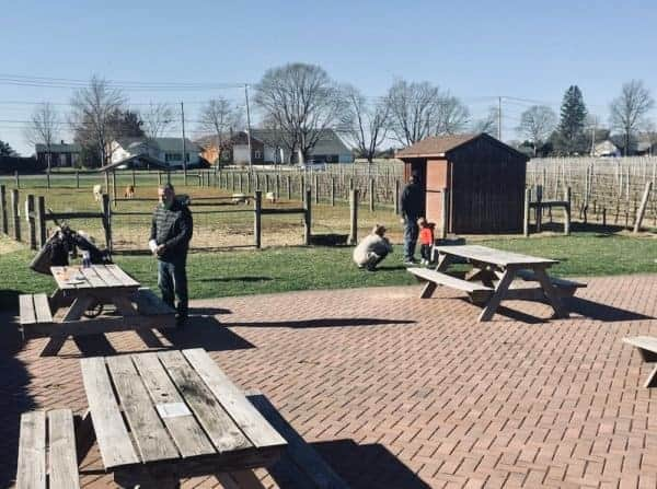 Picnic tables, farm animals and grape vines set the scene for visitors to jason's vineyard on long island's north fork.