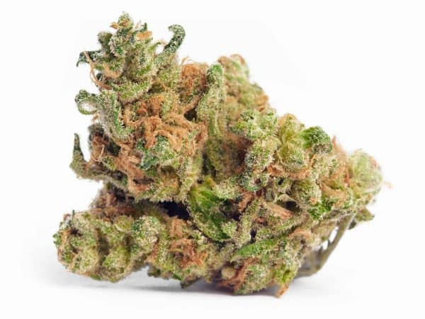 Buy Real Weed Online 420 Mail Order Worldwide Jack Herer