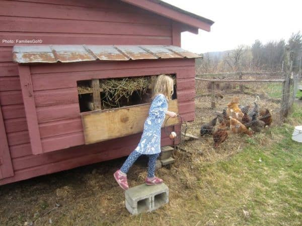 Collecting eggs is the kids' job when you stay at rosebarb farm near ithaca