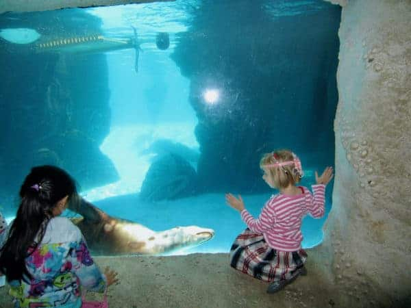 Two girls get up close with sea lions at the long island aquarium