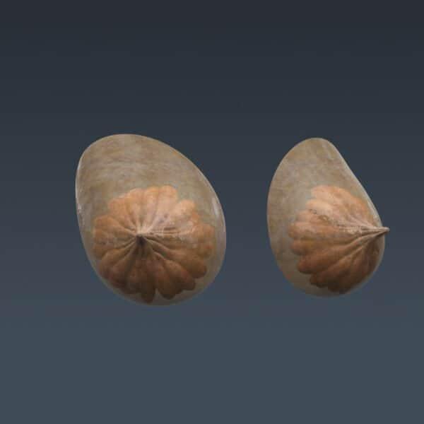 FemaleMuscAnat th025 1