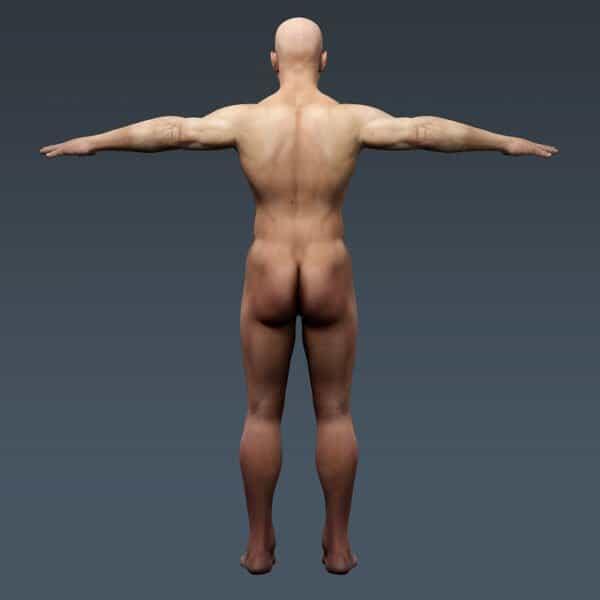 BodyMuscSkel th012