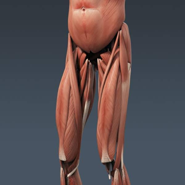 BodyMuscSkel th016
