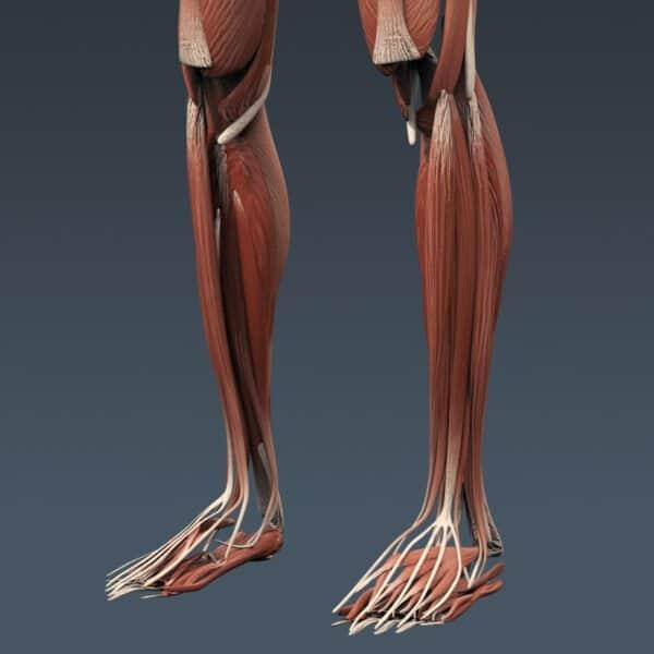 BodyMuscSkel th022