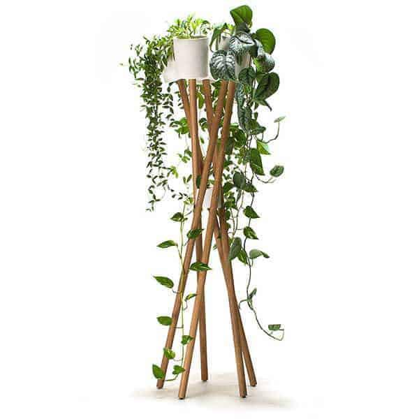 hanging plants, hanging basket plants