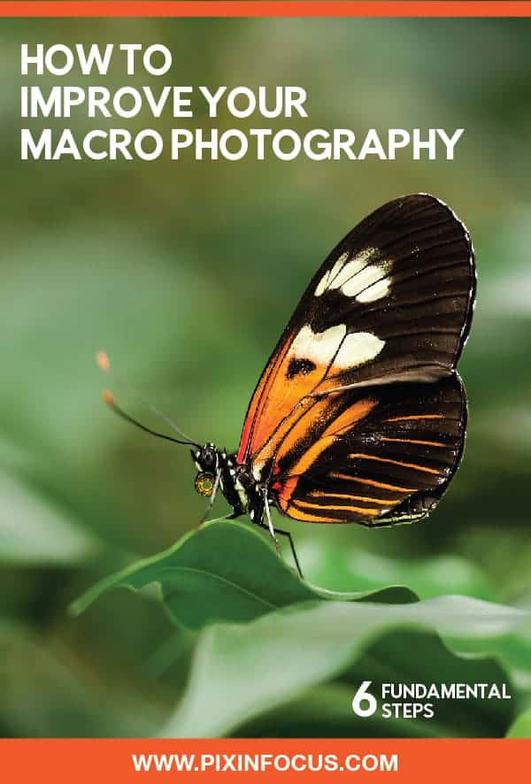Macro Photography tips Pinterest pin