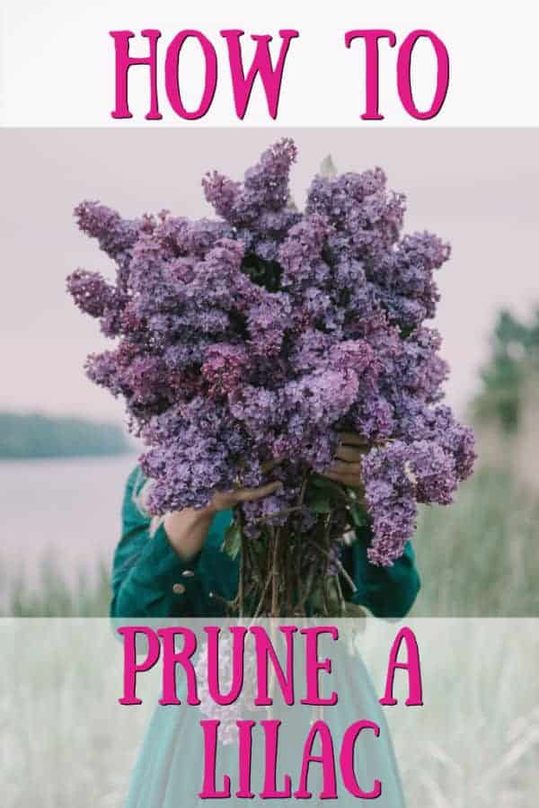 girl holding lilac flowers in front of her face