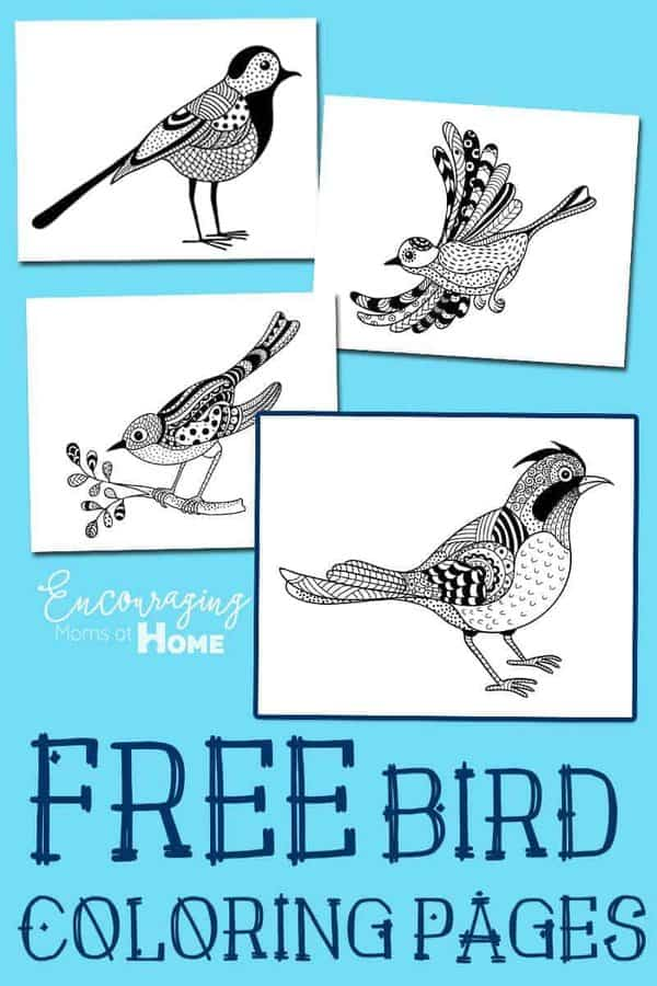 Are you studying birds in your homeschool this year?  Or maybe you just enjoy watching the birds that frequent your yard.  Either way, you are sure to enjoy these FREE printable coloring pages.  They are done in the style of populare adult coloring pages but are fun for adults and kids alike.