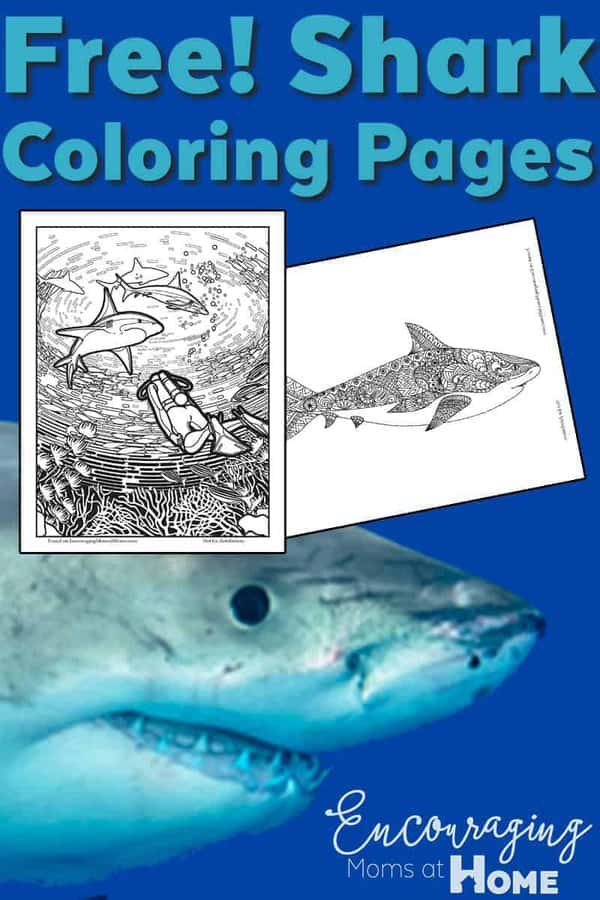 Shark Coloring Pages - Free printable shark coloring pages