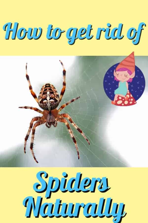how to get rid of spiders graphic