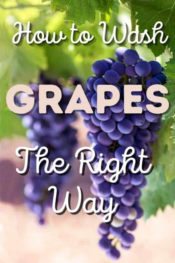 "purple grapes hanging from a vine with text in front ""how to wash grapes the right way"""