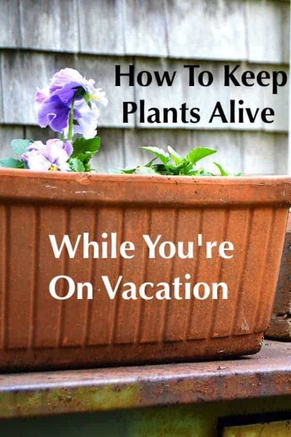 Keeping your plants and flowers alive while you're on vacation isn't as hard as you might think. It just takes a little prep. Follow our tips to come home to healthy blooms. #plants #garden #tips #vacation #homecare #diy #flowers #plantcare