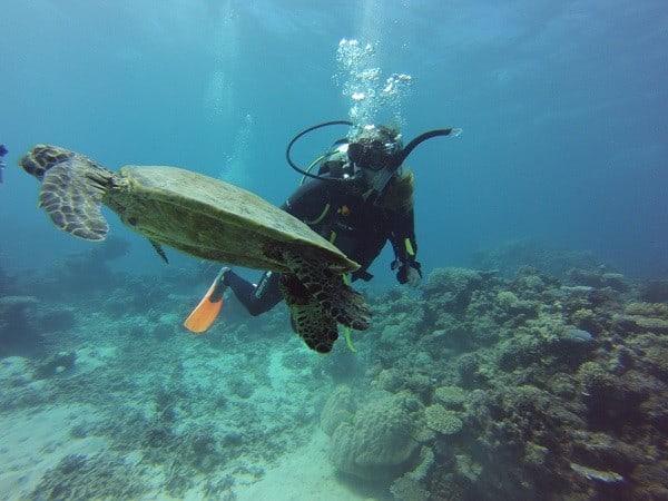 Cairns Tauchen Schildkröte