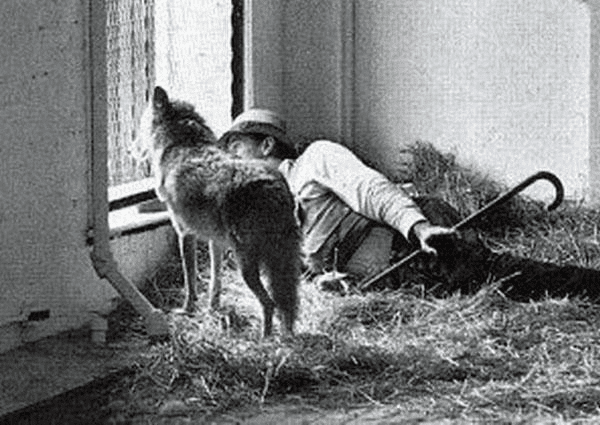 Beuys Art