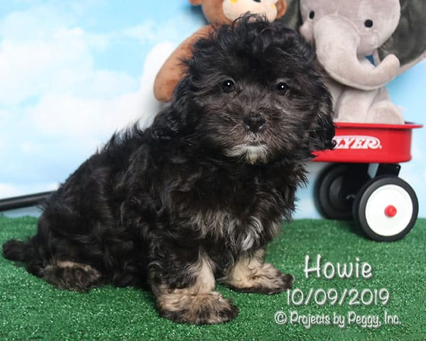 Howie (M)
