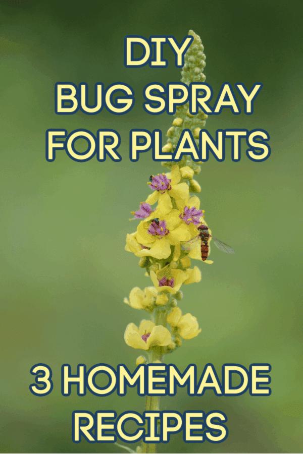 homemade bug spray for plants