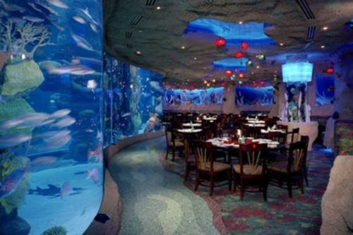 Dining tankside at the denver aquarium restaurant