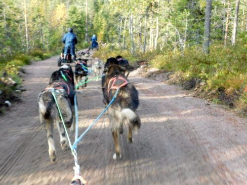 dog sled team in the Lapland countryside