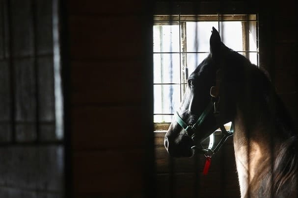 The agency cites privacy laws. Many animal welfare proponents are concerned with how the lack of transparency will affect animals, including horses.