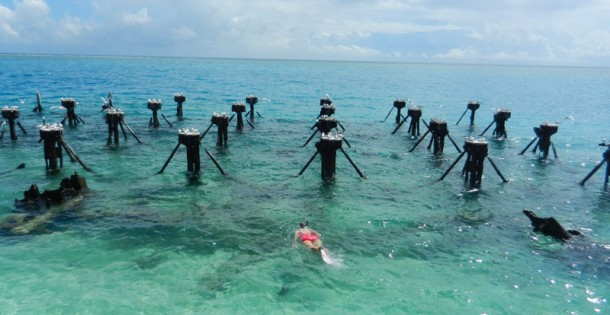 Snorkeling at Dry Tortugas National Park is excellent. These pilings, ruins of coaling docks from around 1900, attract a great range of creatures large and small and are encrusted with colorful coral. (Photo: David Blasco)